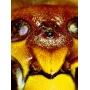 Mikroskop stereoskopický DeltaOptical Discovery 40 20x-40x
