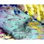 Mikroskop stereoskopický DeltaOptical SZ-450B 10x-45x + statív F2